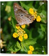5 Yellow Flowers And A Buttefly Acrylic Print