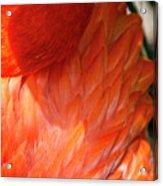 5060- Flamingo Acrylic Print