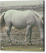 Wild Mustangs Acrylic Print