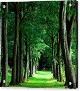 Landscape Definition Acrylic Print