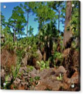 55- Everglades Afternoon Acrylic Print