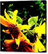 Love Flowers Acrylic Print