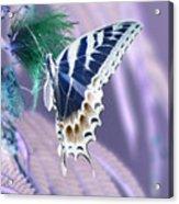 5816 2 Acrylic Print