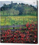 5b6301 Vineyards Of Color Acrylic Print
