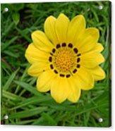 Australia - Daisy With Yellow Petals Acrylic Print