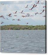 Colombia Sanctuary Of Flamingos Near Riohacha Acrylic Print