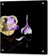 Crocus Flower In Quartz Geode Acrylic Print