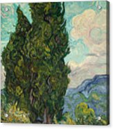 Cypresses Acrylic Print