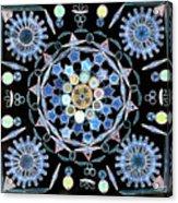 Diatoms Acrylic Print by M I Walker