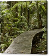 Forest Boardwalk Acrylic Print