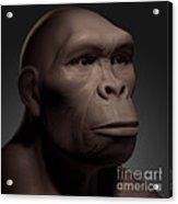 Homo Habilis Acrylic Print
