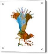 Lyrebird Acrylic Print