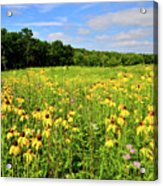 Marengo Ridge Wildflowers Acrylic Print