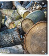 Morning Wood Acrylic Print