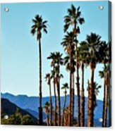 Palm Springs Acrylic Print