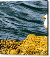 Sea Birds Acrylic Print