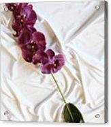 Silk Flower Acrylic Print