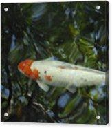 The Koi Pond Acrylic Print