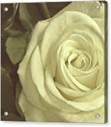 Timeless Rose Acrylic Print
