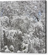 Snow And Branches Acrylic Print