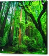 Nature Landscape Light Acrylic Print