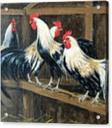 #69 - Roosters Acrylic Print
