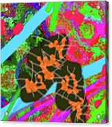 7-30-2015dabcdefghijklmnopqr Acrylic Print