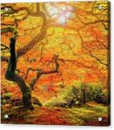 7 Abstract Japanese Maple Tree Acrylic Print