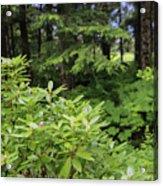 Alaska_00007 Acrylic Print