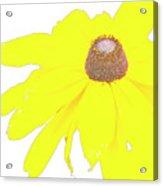 Blackeyed Susan Flower Acrylic Print