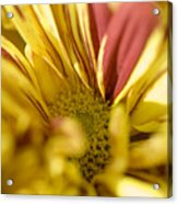 Flower Abstract Acrylic Print