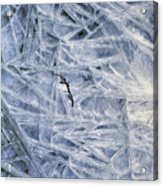 7. Ice Encrustation, Upper West Allen Acrylic Print