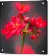 Jatropha Blossoms Painted Acrylic Print