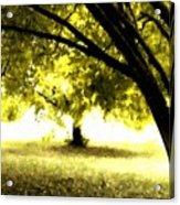 Landscape Wall Acrylic Print