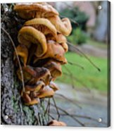 Mushroom Art Acrylic Print