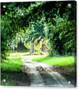 Scenes At Botany Bay Plantation Near Charleston South Carolina Acrylic Print