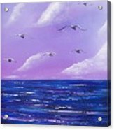 7 Seabirds Acrylic Print