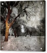 The Winter Time Acrylic Print