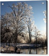 Trees In Ice Series Acrylic Print