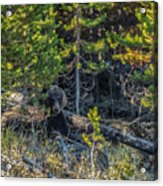 791 In The Forest Acrylic Print