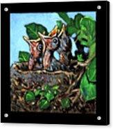 Birdman Of Alcatraz Detail Acrylic Print