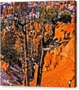 Bryce Canyon N.p. Acrylic Print