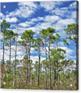 8- Cypress Sky Acrylic Print