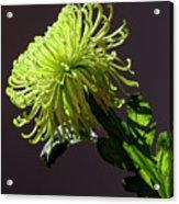Floral Still Life Acrylic Print