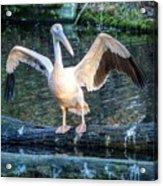 Hellabrunn Zoo - Munich, Germany Acrylic Print