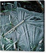 8. Ice Patterns, Whitfield Acrylic Print