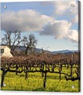 Napa Valley Vineyard Acrylic Print