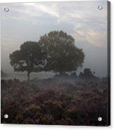 New Forest - England Acrylic Print
