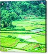 Rice Fields Scenery Acrylic Print