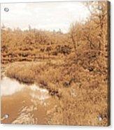 Stream In Autumn, Pocono Mountains, Pennsylvania Acrylic Print